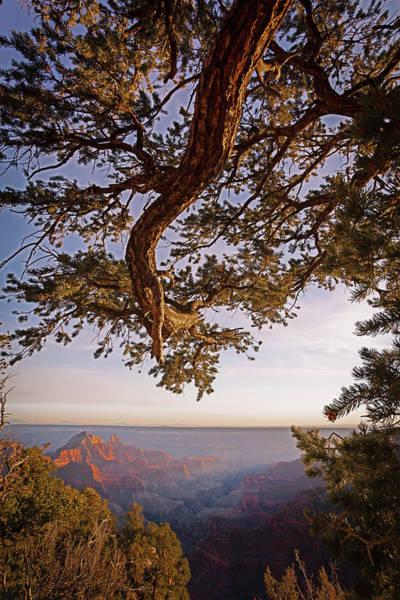 Cedar Tree Photograph - North Rim Sunset by Eric R. Hinson