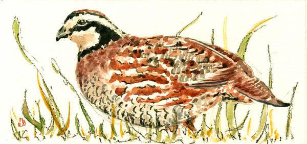 Bird Watercolor Painting - Northern Bobwhite by Juan  Bosco