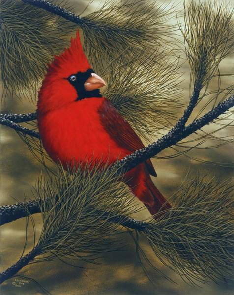Rick Bainbridge - Northern Cardinal