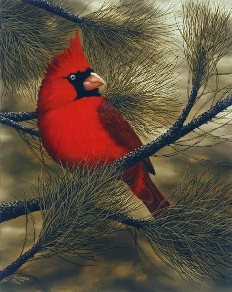 Wall Art - Painting - Northern Cardinal by Rick Bainbridge