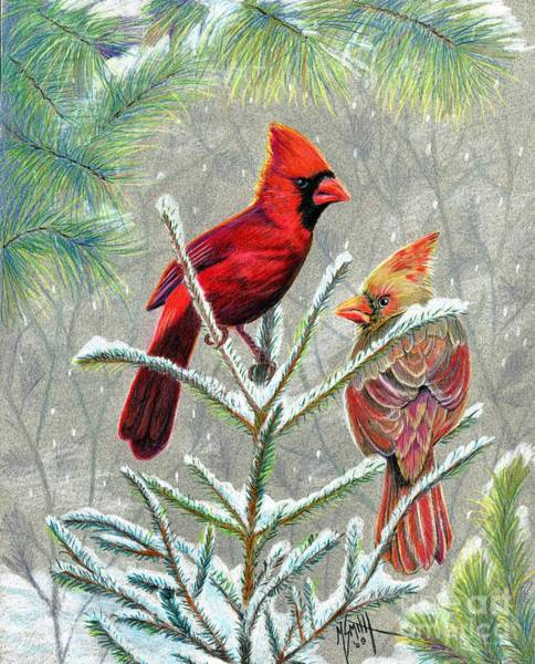 Evergreen Trees Drawing - Northern Cardinals by Marilyn Smith