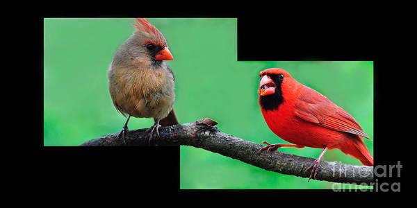 Photograph - Northern Cardinals by Thomas R Fletcher