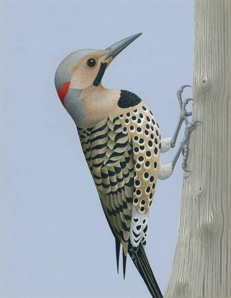 Wall Art - Painting - Northern Flicker by Nathan Marcy