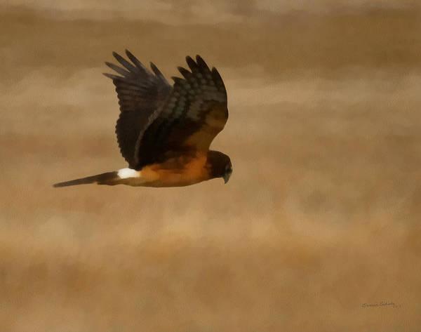 Marsh Bird Digital Art - Northern Harrier Painterly by Ernie Echols