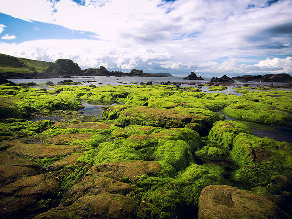 Seaweed Photograph - Northern Ireland by Haoliang