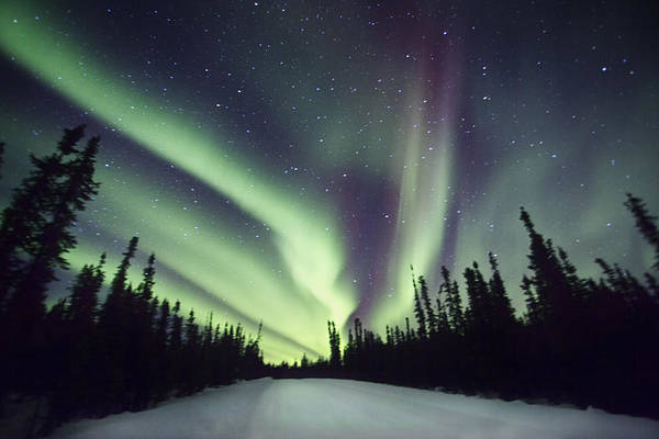 Photograph - Northern Lights II by Gigi Ebert