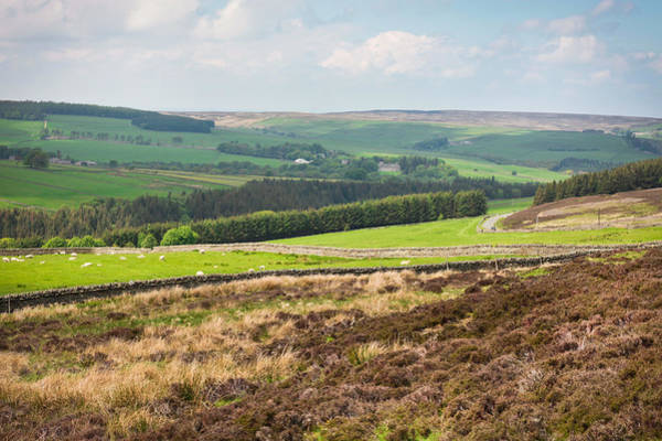 English Countryside Photograph - Northumberland Landscape by Tom Gowanlock