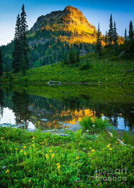 Conifer Photograph - Northwest Sunrise by Inge Johnsson