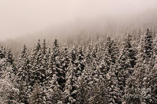 Nikon D5000 Photograph - Northwest Winter by Tikvah's Hope