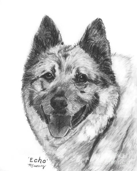 Art Print featuring the drawing Norwegian Elkhound Sketch by Kate Sumners