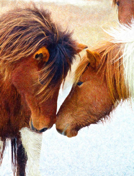 Photograph - Nose To Nose by Alice Gipson