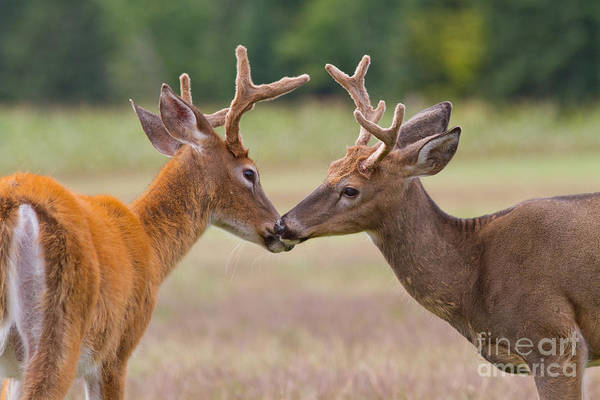 Photograph - Nose To Nose by Kevin McCarthy