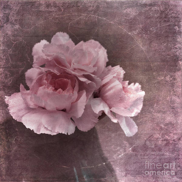 Rosy Wall Art - Photograph - Nostalgia by Priska Wettstein
