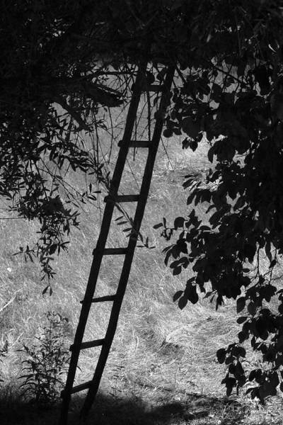Scaling Photograph - Not A Corporate Ladder by Kandy Hurley
