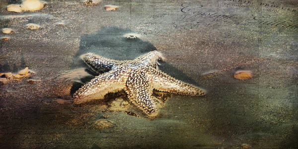 Photograph - Not All Stars Belong To The Sky by Evie Carrier