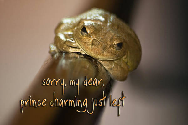 Photograph - Not Prince Charming by Carolyn Marshall