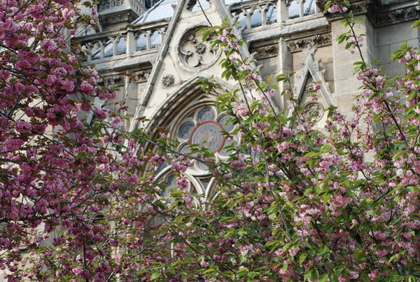 Photograph - Notre Dame In April by Jennifer Ancker