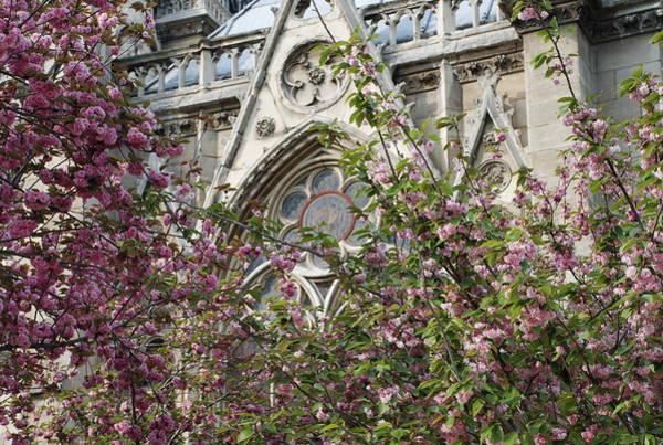Notre Dame In April Art Print