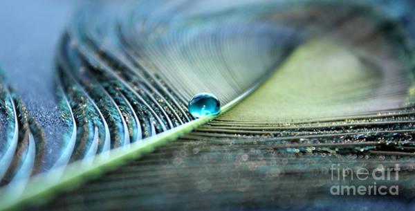 Peacock Photograph - November Calm by Krissy Katsimbras