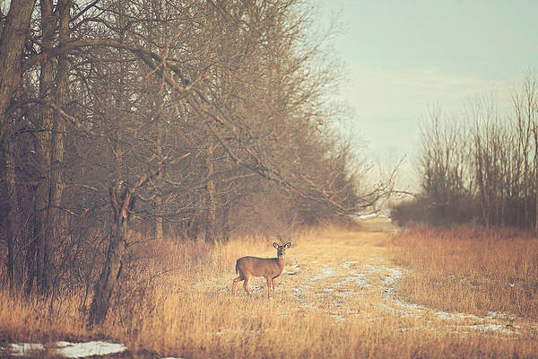 Woods Photograph - November Deer by Carrie Ann Grippo-Pike