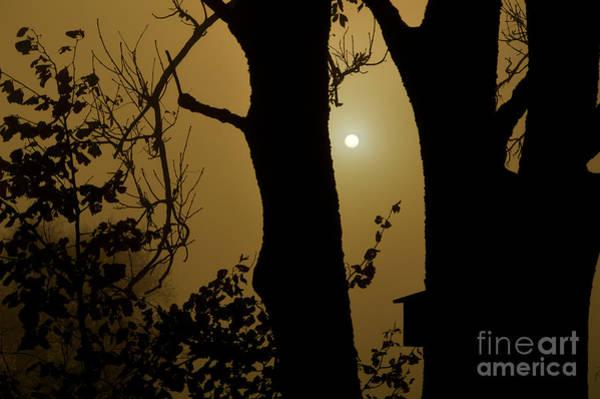 Photograph - November Fog by Susanne Van Hulst
