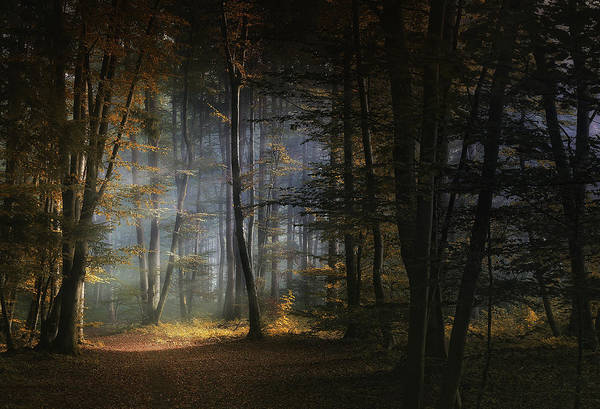 Hope Photograph - November Morning by Norbert Maier