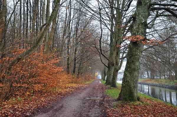 Photograph - November Walk by Randi Grace Nilsberg