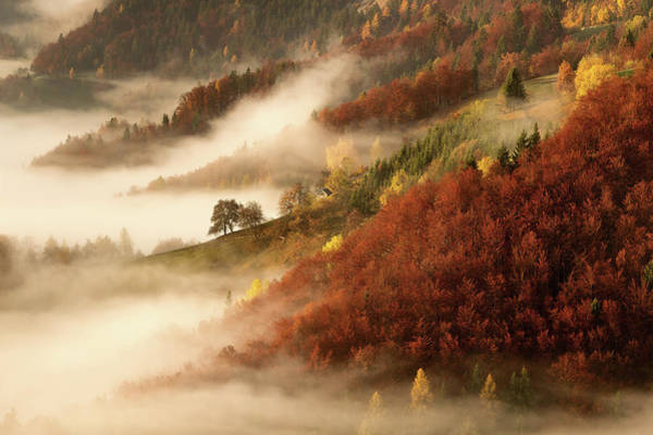Foliage Photograph - November's Fog by