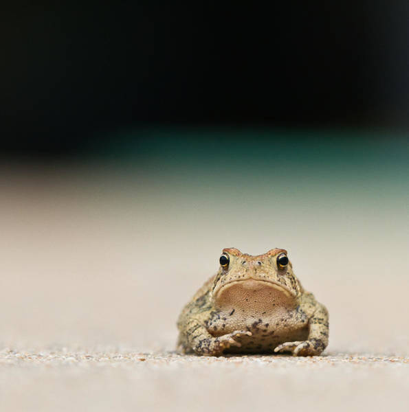 Frog Photograph - Nowhere Man by Annette Hugen