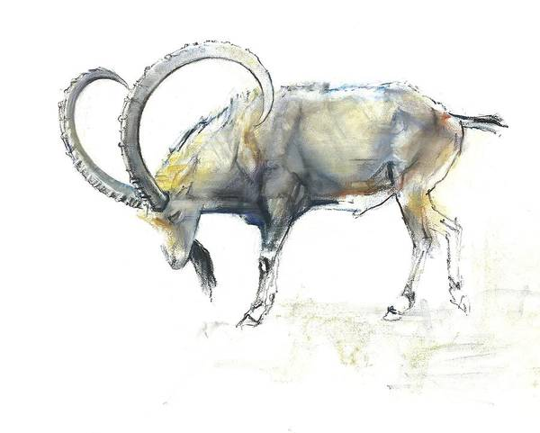 Pastel Drawing Painting - Nubian Ibex by Mark Adlington