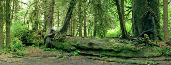 Wall Art - Photograph - Nurse Log by Peter Scoones/science Photo Library