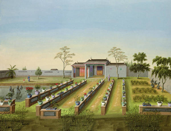 Chinese Drawing - Nursery Garden, C.1820-40 by Chinese School