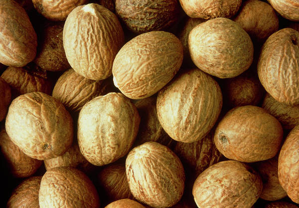 Wall Art - Photograph - Nutmegs by Th Foto-werbung/science Photo Library