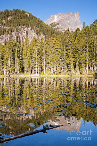 Photograph - Nymph Lake In Rocky Mountain National Park by Fred Stearns