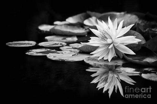 Lilly Pad Photograph - Nymphaea Maria by Tim Gainey