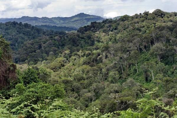 Rwanda Photograph - Nyungwe National Park by Tony Camacho/science Photo Library