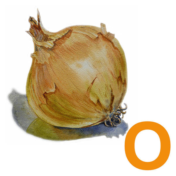 Onion Painting - O Art Alphabet For Kids Room by Irina Sztukowski
