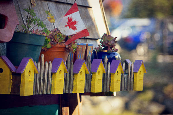 Houseboat Photograph - O Canada by Maria Angelica Maira