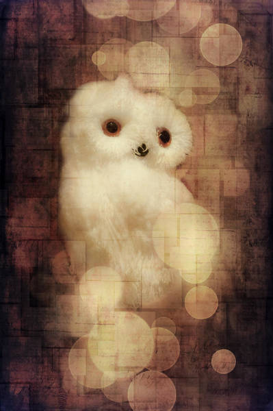 Greetingcards Photograph - O Owly Night by Loriental Photography