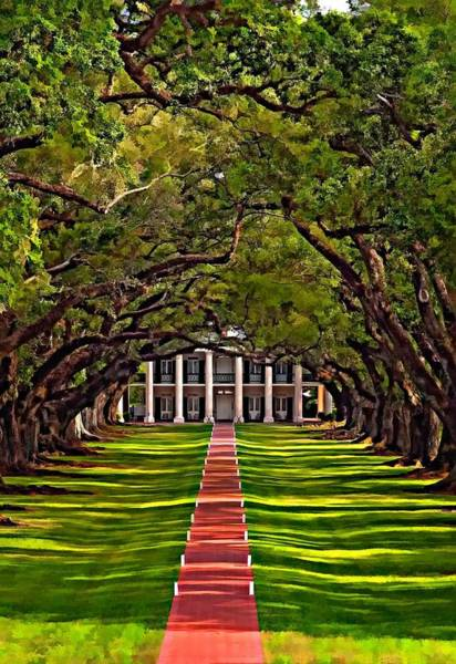 Steve Harrington Wall Art - Photograph - Oak Alley II by Steve Harrington
