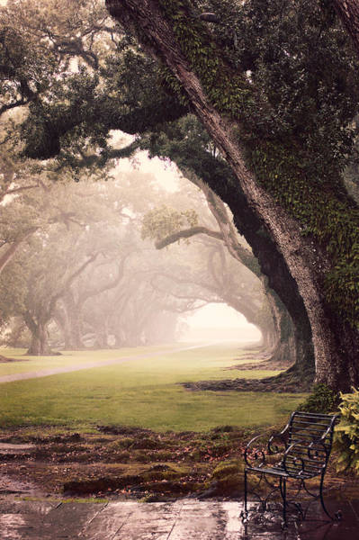 Photograph - Oak Alley by Maria Robinson