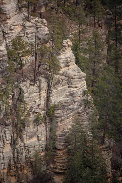 Photograph - Oak Canyon Arizona by Steven Lapkin