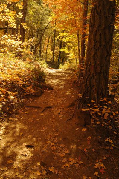 Photograph - Oak Creek Trail by Tam Ryan