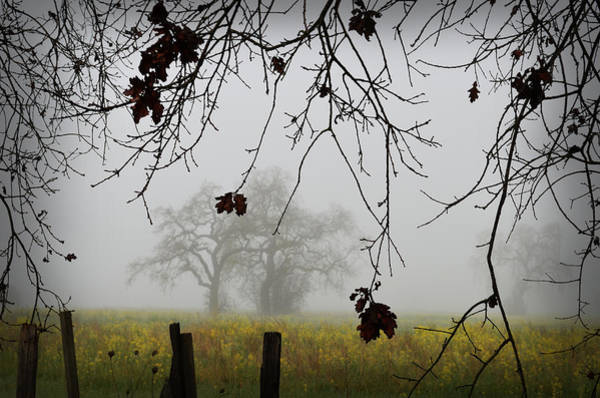 Photograph - Oak Dreams by Spencer Hughes