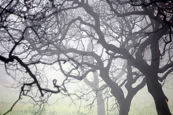 Wall Art - Photograph - Oak Forest Quercus Ilex Burned by David Santiago Garcia