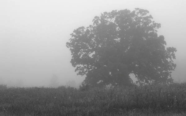 Photograph - Oak In The Fog by Michael Colgate