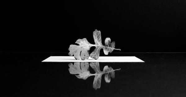 Photograph - Oak Leaf by Mary Lee Dereske