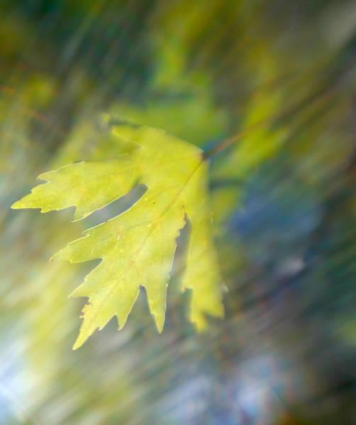 Wall Art - Photograph - Oak Leaves by Byron Jorjorian