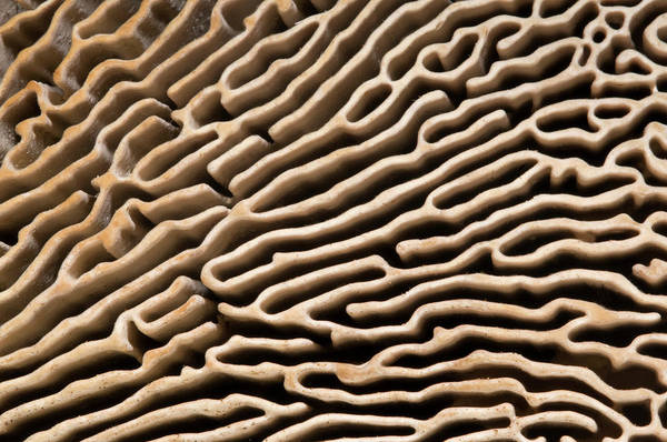 Mycology Wall Art - Photograph - Oak Mazegill Pore Structure Abstract by Nigel Downer