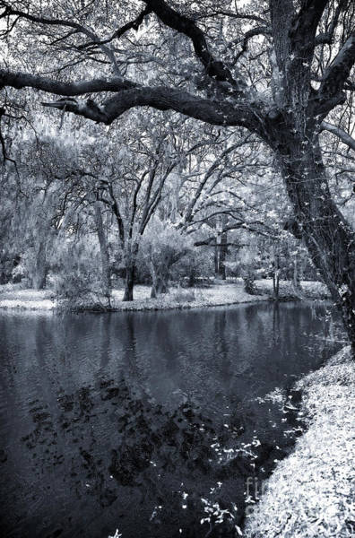 Photograph - Oak On The Side Of The Pond by John Rizzuto